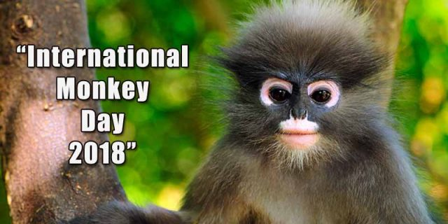 International Monkey Day 2018, World Monkey Day 2018