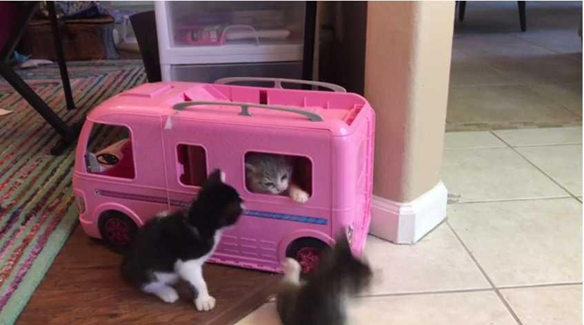 Three happy kittens in Barbie Van