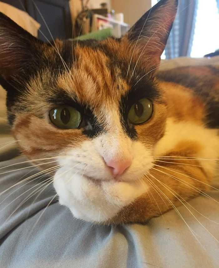 The Cat With Weird Eyebrows