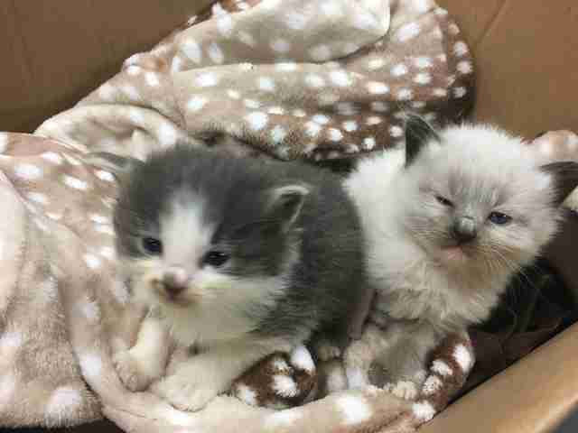 Kittens Won't Stop Cuddling With The Police Officer Who Saved Their Lives