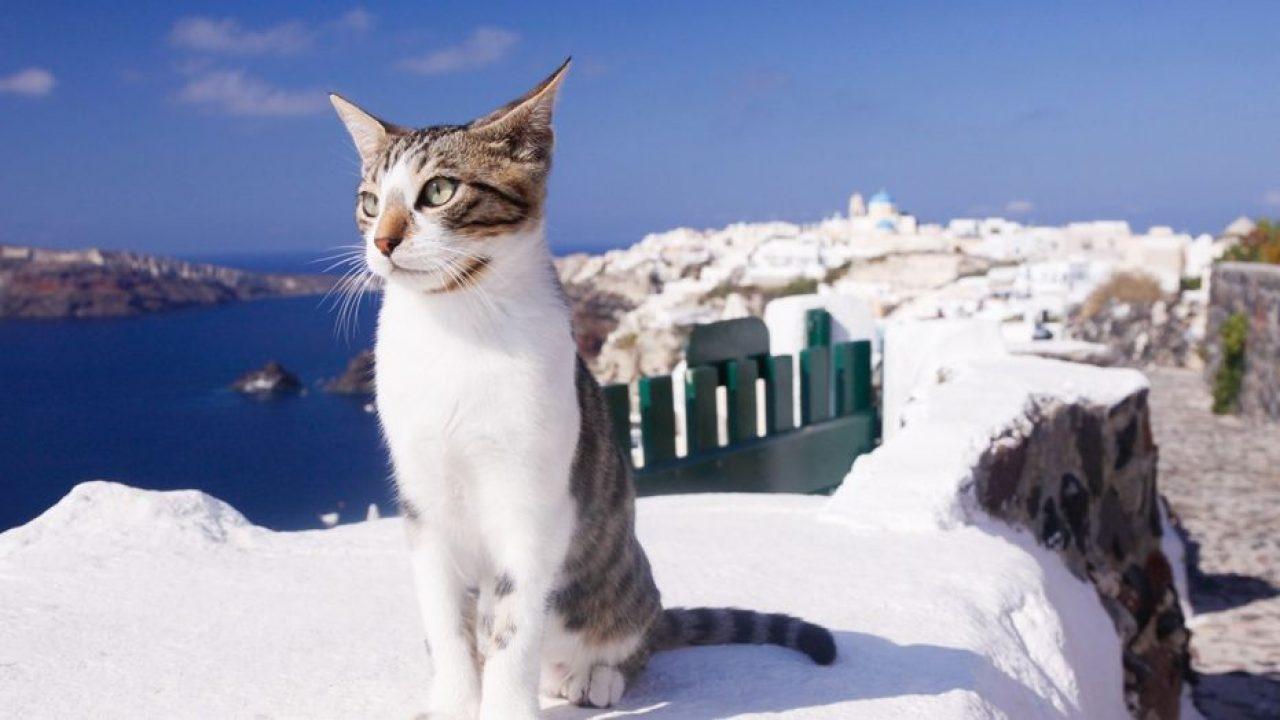 Greek cat sanctuary hiring caretaker to live on island, supervise 55